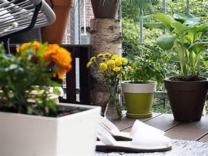 Sonnenschirm Kleiner Balkon : kleiner balkon katzen das beste aus wohndesign und m bel ~ Michelbontemps.com Haus und Dekorationen