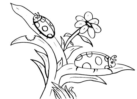 coloring  blog archive ladybug coloring pages