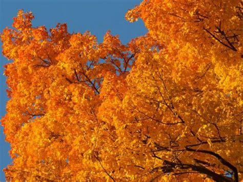 peak fall colors peak dates for 2016 fall foliage interactive map st