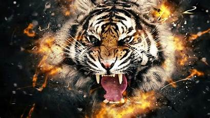 3d Tiger Wallpapers Scene Wide Dangerious Background