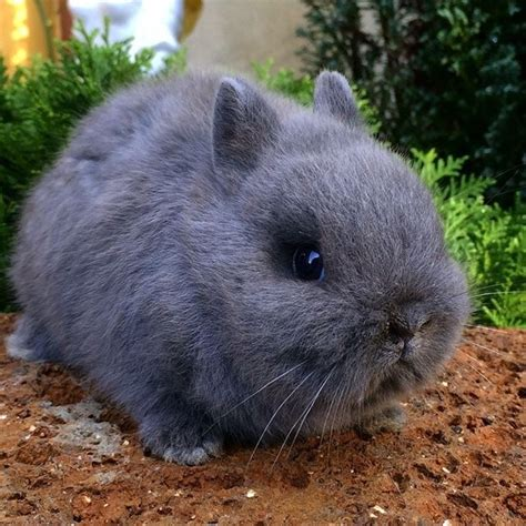 Gabbia Coniglio Nano Gabbia Coniglio Nano Conigli Nani Gabbia Coniglio Nano