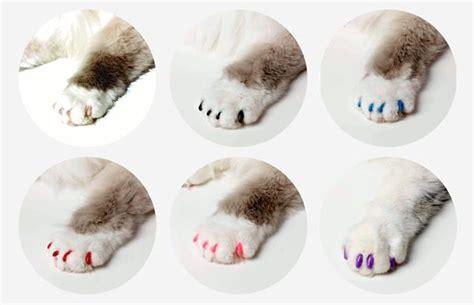 les protege griffes softclaws pour chat  chaton paperblog