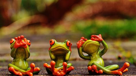 green frogs with 3 d wallpaper hd 3840x2160