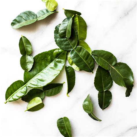 lime leaves kaffir lime leaves