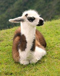 5 Baby animals too cute to be real   Tes, Too cute and ...