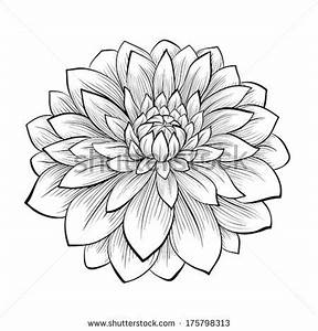 Aster Flower Drawing Pictures to Pin on Pinterest - PinsDaddy