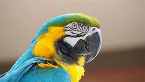 Welche Vögel Können Sprechen : bringen sie ihrem papageien das sprechen bei tierheimliste ~ A.2002-acura-tl-radio.info Haus und Dekorationen