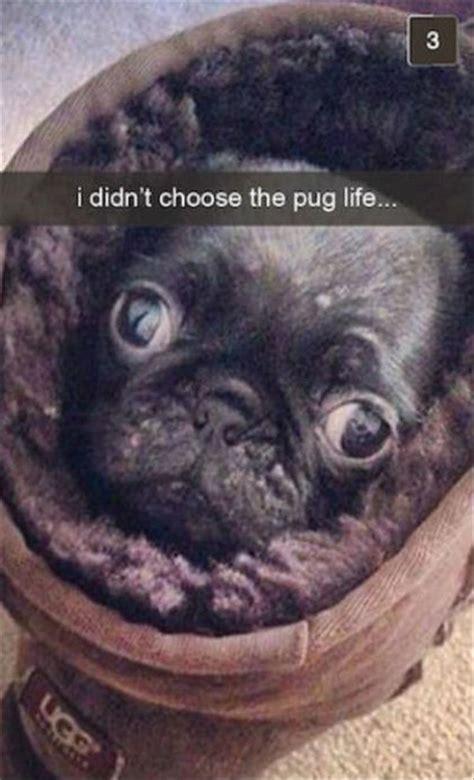 funny dogs  snapchat  pics