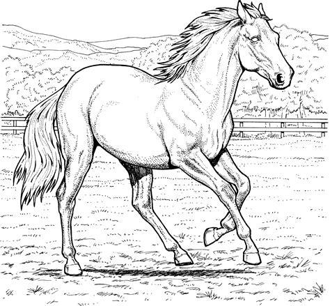 horse coloring pages horse coloring pages horse coloring animal coloring pages