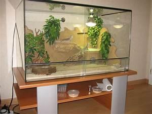Terrarium Plante Deco : plante terrarium desertique pogona ~ Dode.kayakingforconservation.com Idées de Décoration