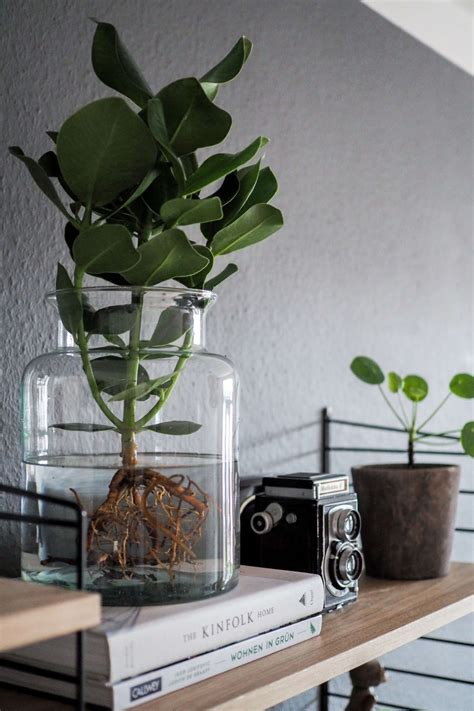 water plants der neue pflanzentrend interior design