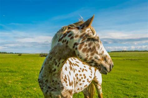 Die Schönste Farbe Der Welt mehr als 70 sch 246 ne pferde bilder archzine net