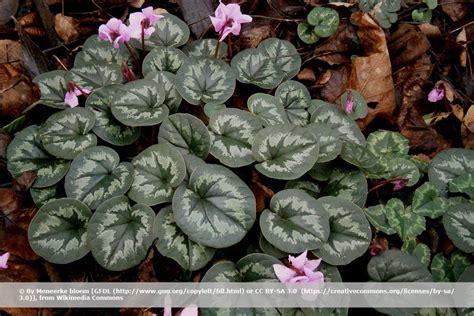 Winterharte Blumen Für Kübel by 30 Winterharte Blumen A Z F 252 R Balkon Und Beet