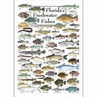 Best 25 ideas about florida freshwater fish find what youll love florida freshwater fish identification sciox Choice Image