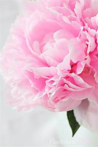 Pfingstrosen In Der Vase : fl ckchenliebe rosa rosa rosa ~ Buech-reservation.com Haus und Dekorationen