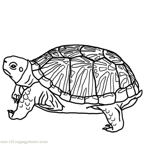Turtles Free Coloring Pages Turtle Coloring Pages Bestofcoloring