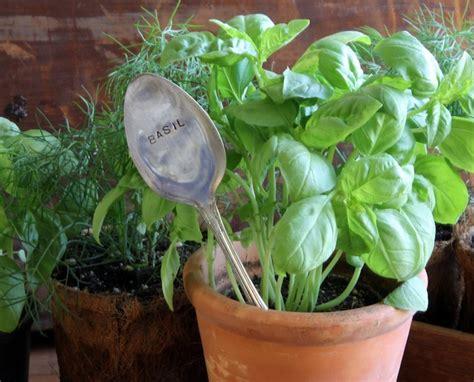 arrosage du basilic en pot 28 images prendre soin du basilic en pot les carottes sont cuites