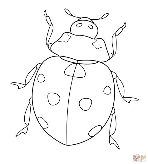 ladybug super coloring randy ladybug coloring page