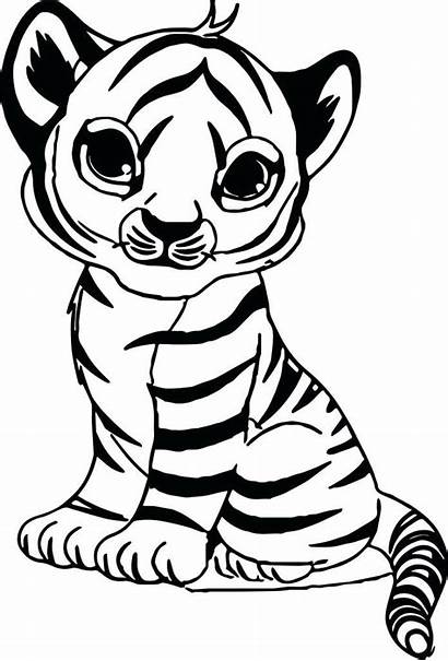 Tiger Coloring Pages Tigers Animal Sheet