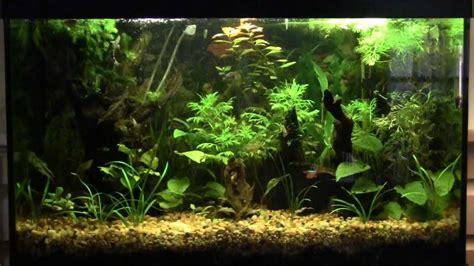 freshwater fish 29 gallon tank 29 gallon 2017 fish tank maintenance