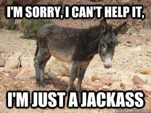 im      im  donkey meme picsmine