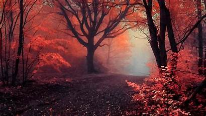 Mystic Forest Backgrounds Wallpapers Kolpaper Awesome