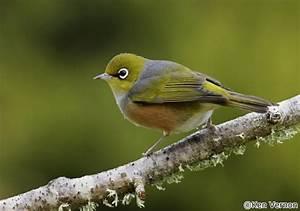 Native Birds - New Zealand Birds Websites Where Locations