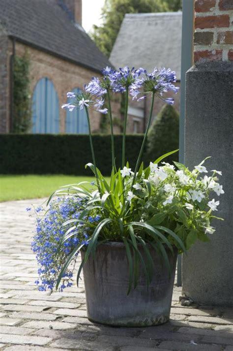 zomerbloeiers voor bloembakken groen van bij ons