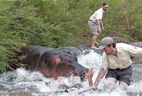 Beware Of Hippopotamus