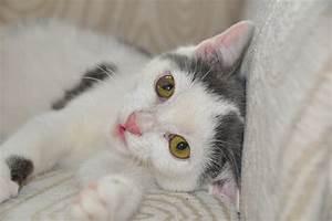 Katzenalter Berechnen : esperanza unsere tiere unsere katzen ~ Themetempest.com Abrechnung