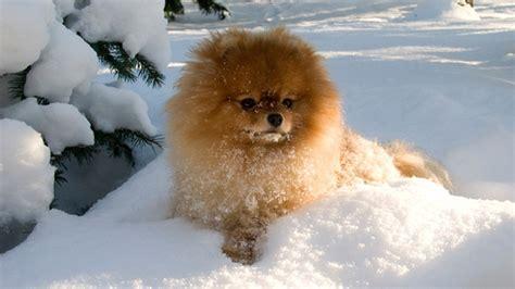cuisiner pour chien chien comment l 39 aider à affronter l 39 hiver