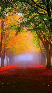 Wallpaper, Park, 5k, 4k, Wallpaper, 8k, Autumn, Beautiful