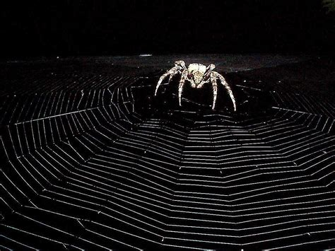 web for pc spider wallpapers wallpaper cave