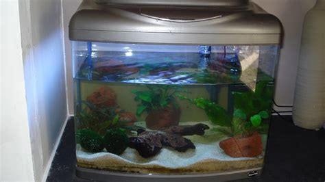 aquarium d occasion le bon coin 28 images aquarium contre poney perles du bon coin meuble
