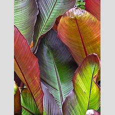 Tropical Plants For Sale  Buy Tropical Plants In The Uk