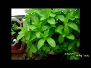 Gemüse Auf Dem Balkon : balkongarten kr uter und gem se auf dem balkon ein ~ Lizthompson.info Haus und Dekorationen
