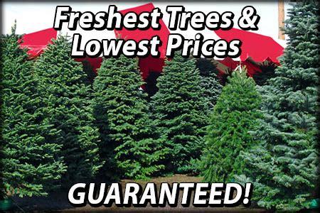 houston garden center christmas trees trees specials moon valley nurseries