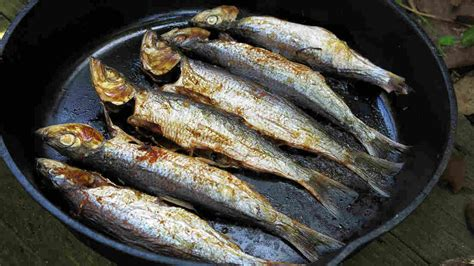 cuisine of california herring headache the big obstacles to small fish