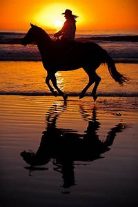 Horse on a beach at sunset | Silhouettes | Pinterest