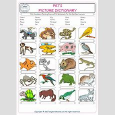 Pets Vocabulary Matching Exercise Esl Worksheets For Kids And New Learners