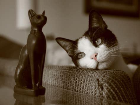 history  cats    feline domestication petmd