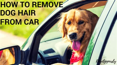 Removing Hair From Car Upholstery by How To Remove Hair From Car Seats Dogclippersly