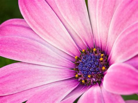 macro flower photography flower photography pinterest