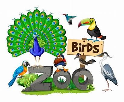 Zoo Soorten Verschillende Aves Vogels Dierentuin Birds