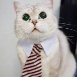 cat tie cat tie accessories products for cats
