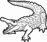Crocodile Coloring Baby Pages Cute Printable Getdrawings sketch template