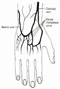 Veins In The Hand For Iv Site Selection  Even If You