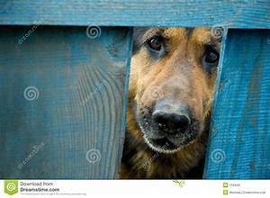 german shepherd dog house plans about animals With german shepherd dog house plans