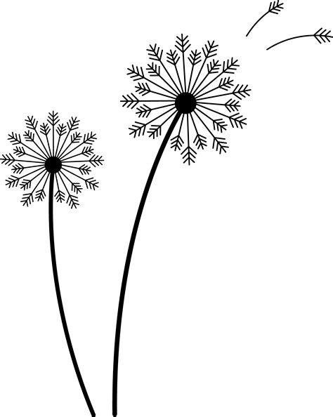 art dandelion google search drawing study dandelion