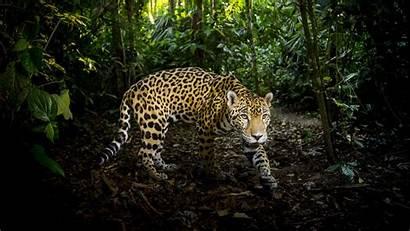 Nature Cats Pbs Super Supercats Cat Episode